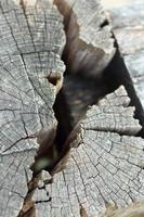 Löcher im Holzhintergrund foto