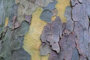 Holz Holzbrett Hintergrund foto