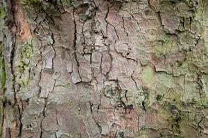 abstrakter Baumhintergrund der hölzernen Holzplanke foto
