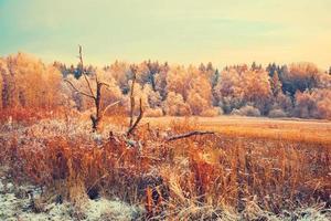 Landschaft bei Sonnenuntergang. trockenes Gras, trockenes Holz, Wald