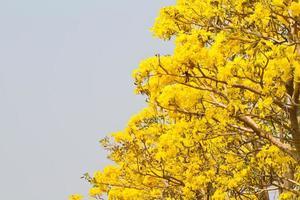 Herbstwaldbäume. Natur grünes Holz Sonnenlicht Hintergründe. foto