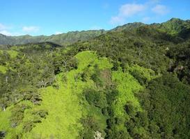 Grüns von Kauai foto