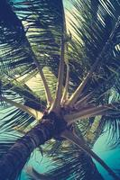 Retro gefiltertes Palmendetail foto