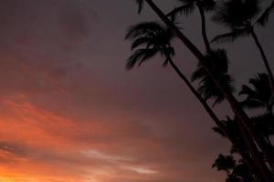 Palmen bei Sonnenuntergang foto