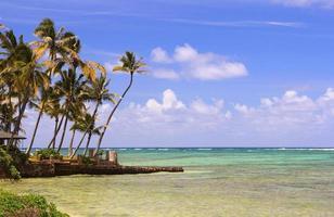 oahu hawaii pazifischer ozeanpalmenstrand landschaftlich reizvoll foto