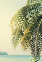 Palmenzweige gegen das Meer foto