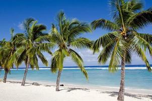 Titikaveka Strand in Rarotonga Kochinseln foto