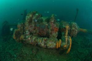 Bootswrack, Sergeant Damselfish in Ambon, Maluku, Indonesien unter Wasser foto