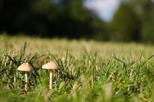 junge winzige Pilze foto