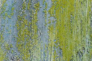 Textur. Holz