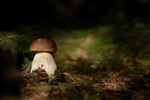 Cep im Wald foto