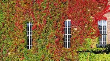 grüne Wand horizontal am Rathaus foto