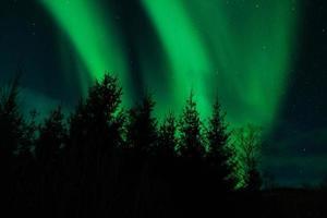 Aurora Borealis (Nordlichter) hinter Bäumen