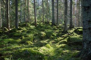 moosiger grüner Wald foto