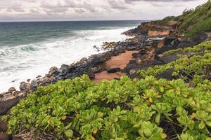 grüne Pflanzen auf Hawaii, USA.