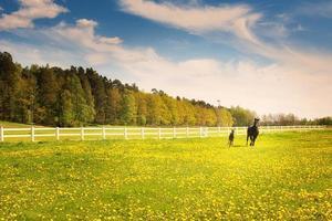 Fohlen mit Mutter läuft auf offenem Feld foto