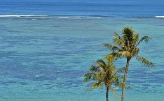 Palmen auf einem tropischen Paradies foto