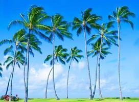 Kokospalme am Strand in Hawaii foto