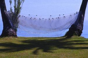 Netz auf Handflächen foto