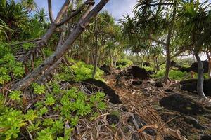 Spur im Waianapanapa State Park foto