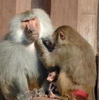 Mönchsfamilie