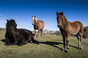 Familienporträt der Pferde foto