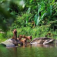 asiatische Wildhundefamilie foto