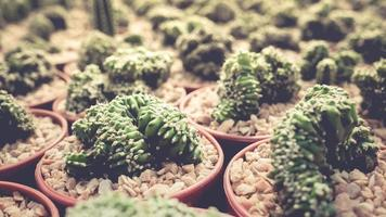 Sammlung der Kaktusfamilie.