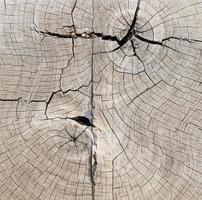 natürliche Holzstruktur oder Hintergrund foto