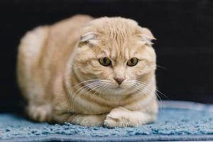 Katzenporträt foto