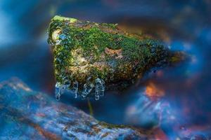 Wassertier foto