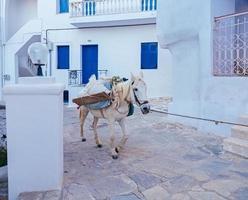 weißes Pferd mit Gepäck, das auf der Straße geht foto