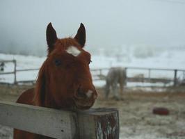 Porträt des Pferdes