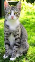 sitzendes Katzenporträt foto