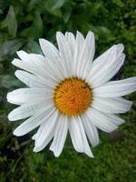 Blume nah oben