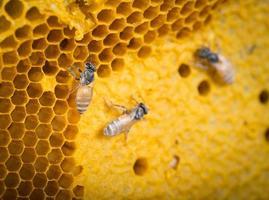 Bienen aus der Nähe foto