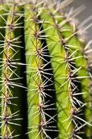 Nahaufnahme Kaktus