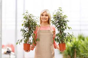 professioneller Florist, der im Gewächshaus arbeitet foto