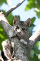 Katzenkätzchen auf Baum foto