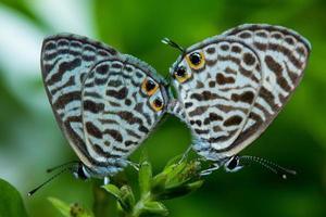 kleine Schmetterlinge