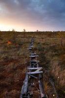 alter Fußweg im Moor foto