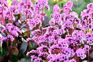 schönes Blumenporträt foto