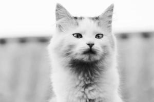 Porträt der Katze foto