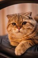 süße Katze genießt sein Leben foto