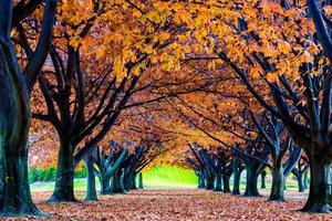 Herbstansicht von Bäumen und Blättern voller Farben