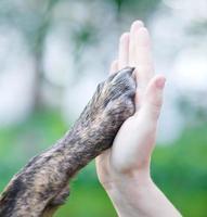 Hundepfote in einer menschlichen Hand, hohe fünf Art