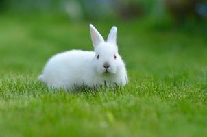 lustiges weißes Kaninchen des Hasen im Gras foto