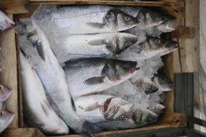 Meeresfrüchte foto