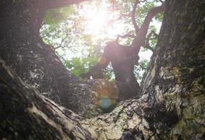 großer Baum im Park foto