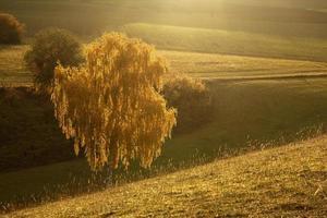 hintergrundbeleuchteter gelber Baum schließen foto